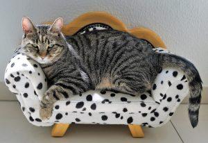 chat-chien-panier-bernay
