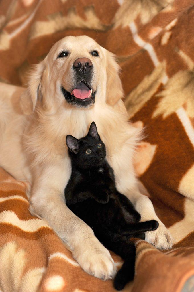 Garde votre chat et votre chien à votre domicile en votre absence à Bernay