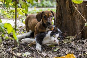 chiot et chaton à Bernay dans l'Eure, éducation garde pension soins au domicile de l'animal