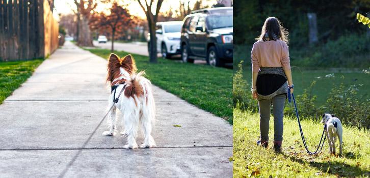 Je promème votre chien à Bernay dans l'Eure.