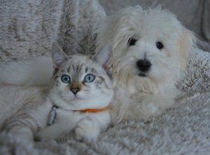 chats est chiens à Bernay visites et garde à domicile, pension féline et canine à votre domicile à Bernay 27300 Eure